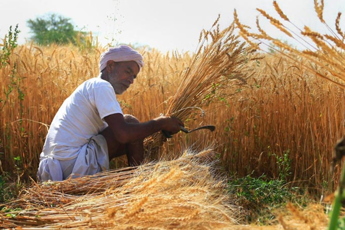 Govt hikes rabi MSPs in advance amid farmer stir