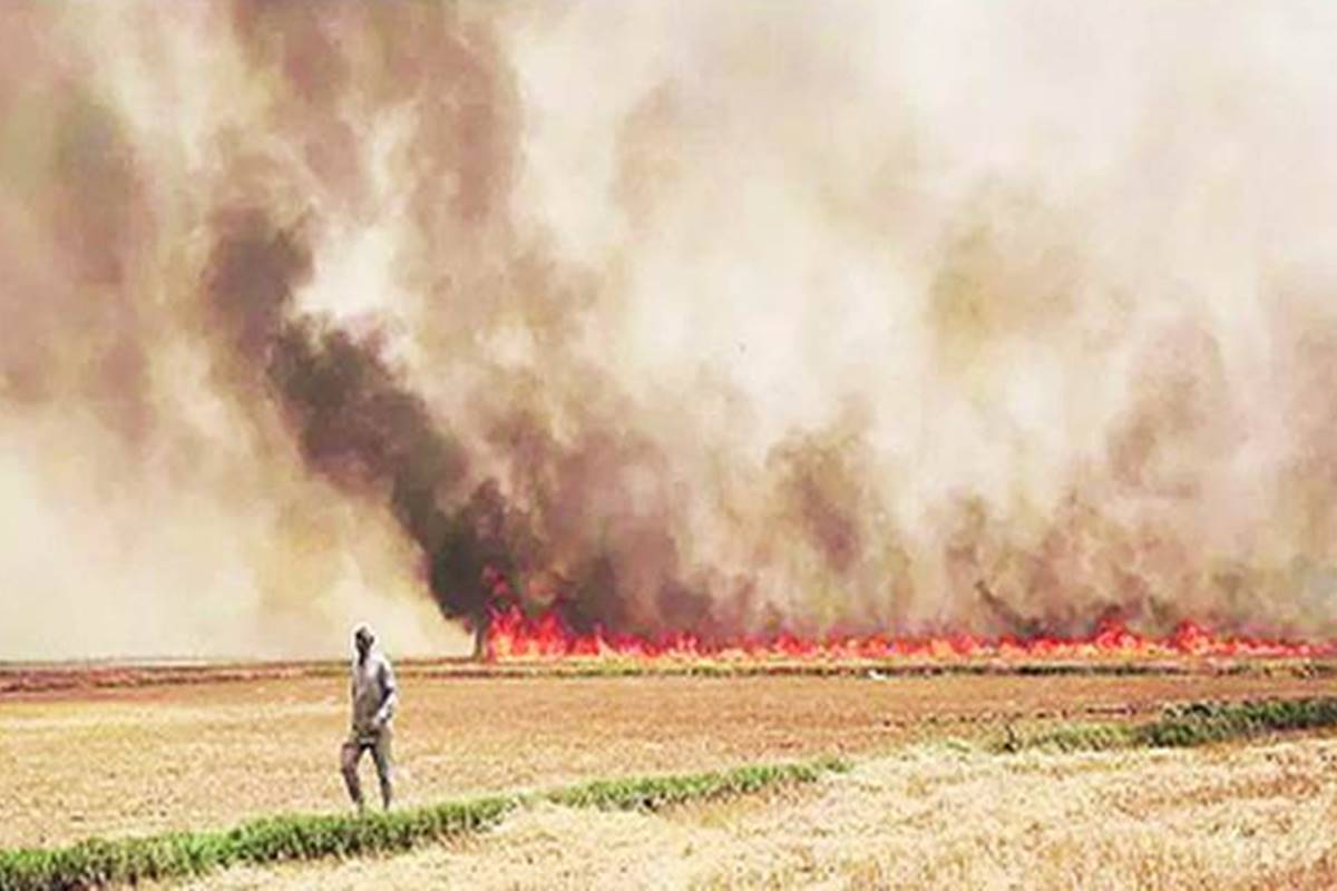 Delhi air pollution: Capital to launch solution for stubble burning from October 11