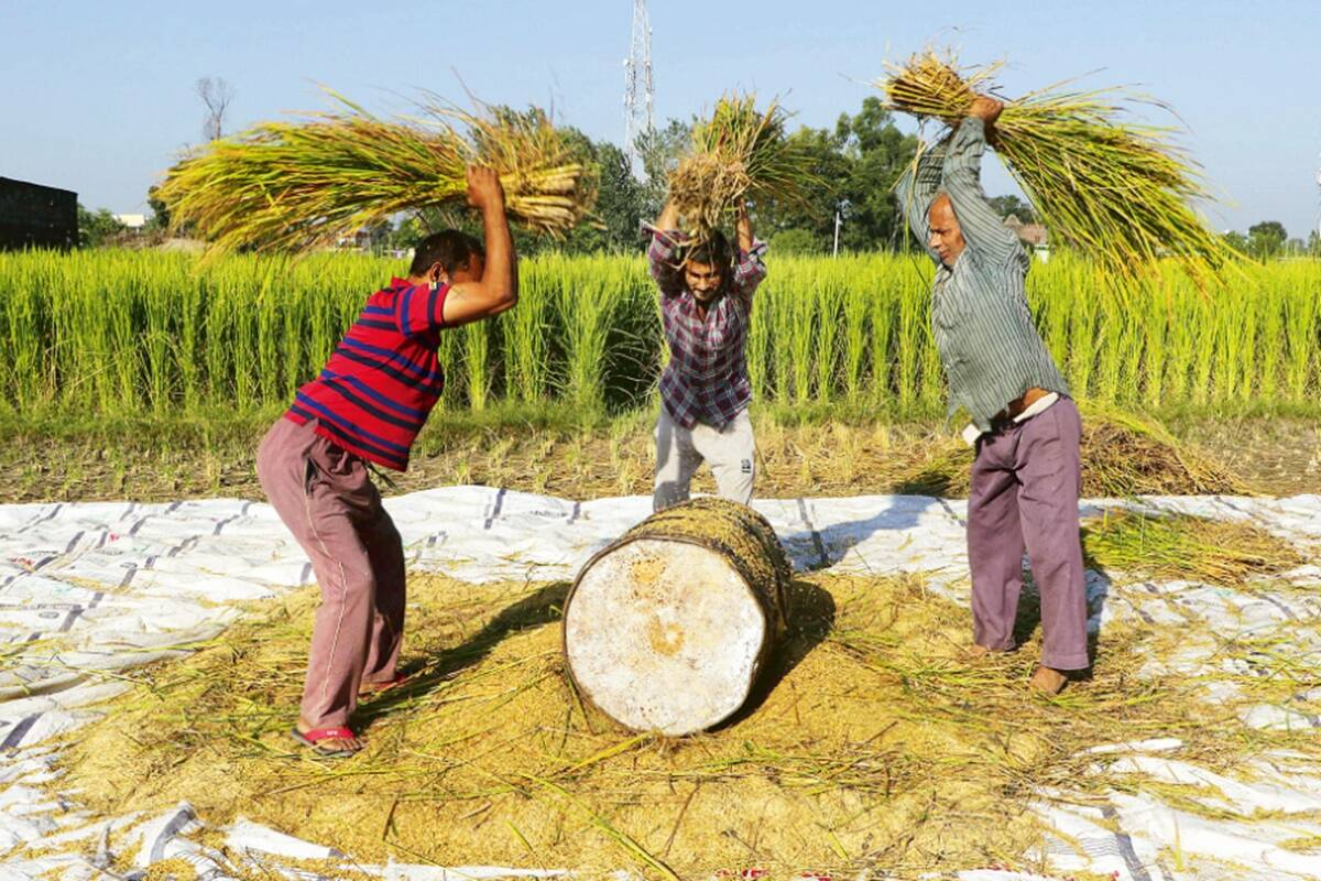 Freedom of choice to farmers: Are new farm Acts a watershed moment for Indian agriculture?