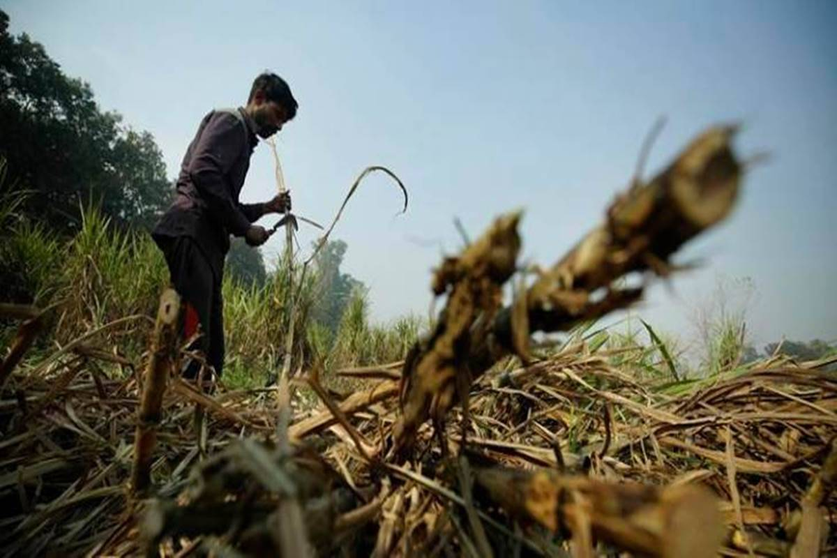 Maharashtra cane workers call off strike after 14% hike in wages