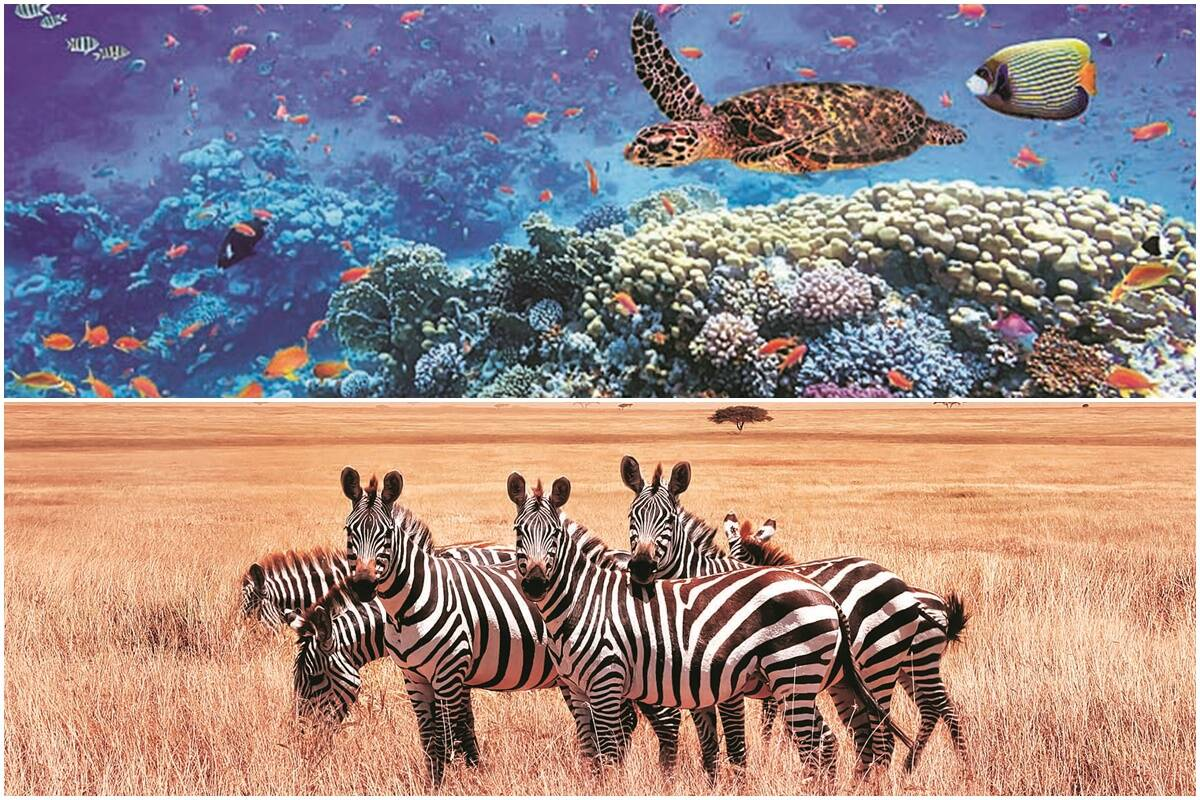 UN's Global Biodiversity Outlook report: A wake-up call