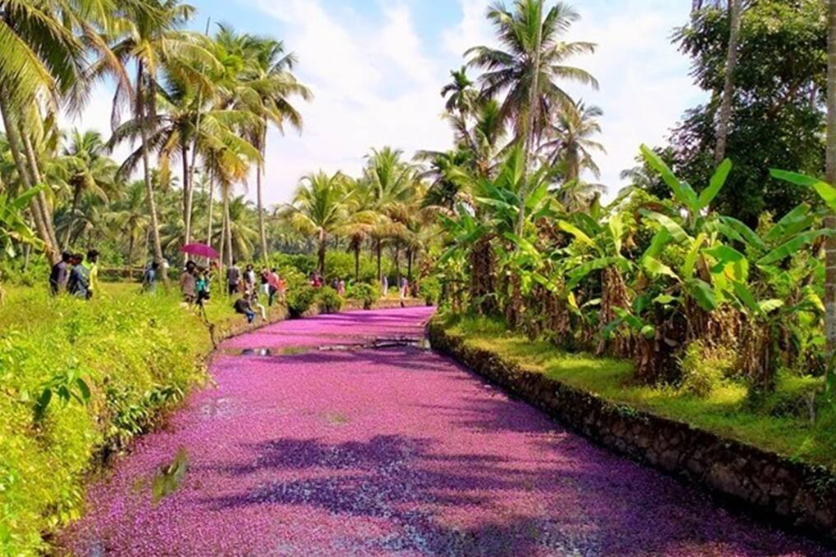 Move over Japan's Cherry Blossoms, Kerala's pristine 'blooming tales' are wowing tourists and how!