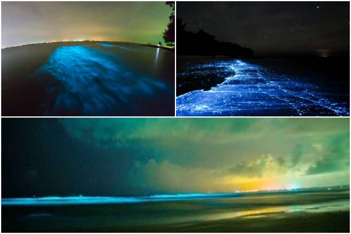 Mumbai to Goa, India's West Coast sparkles with stunning 'blue tide' but it's not THAT romantic!