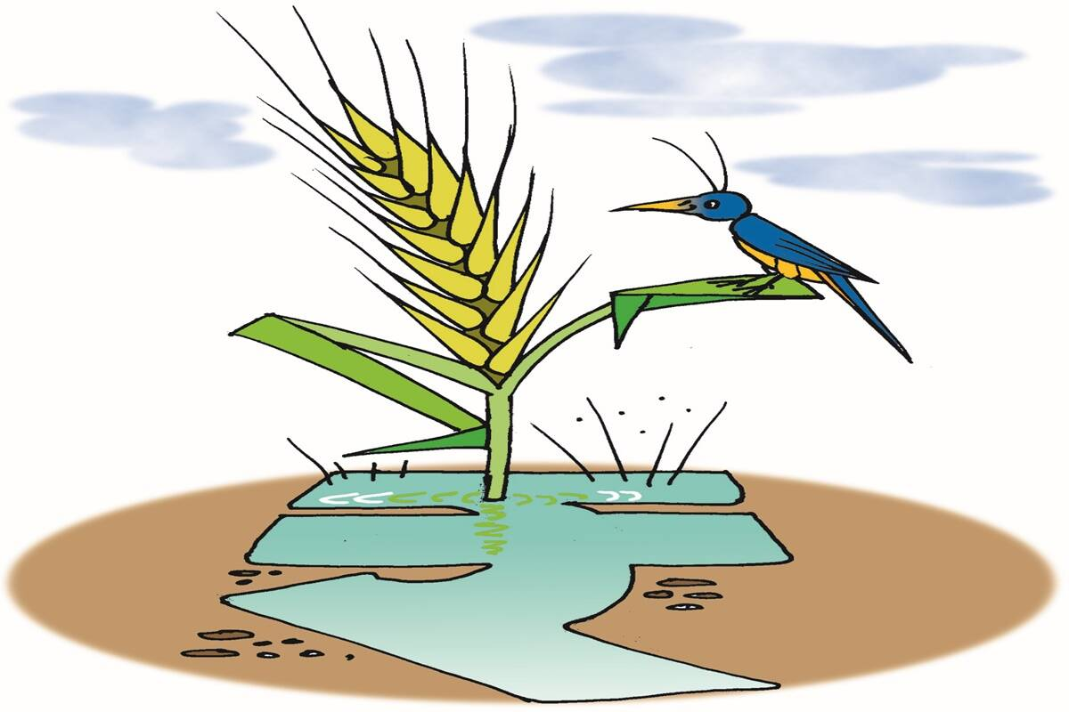 Sustainable agriculture: Incentivise ecosystem services