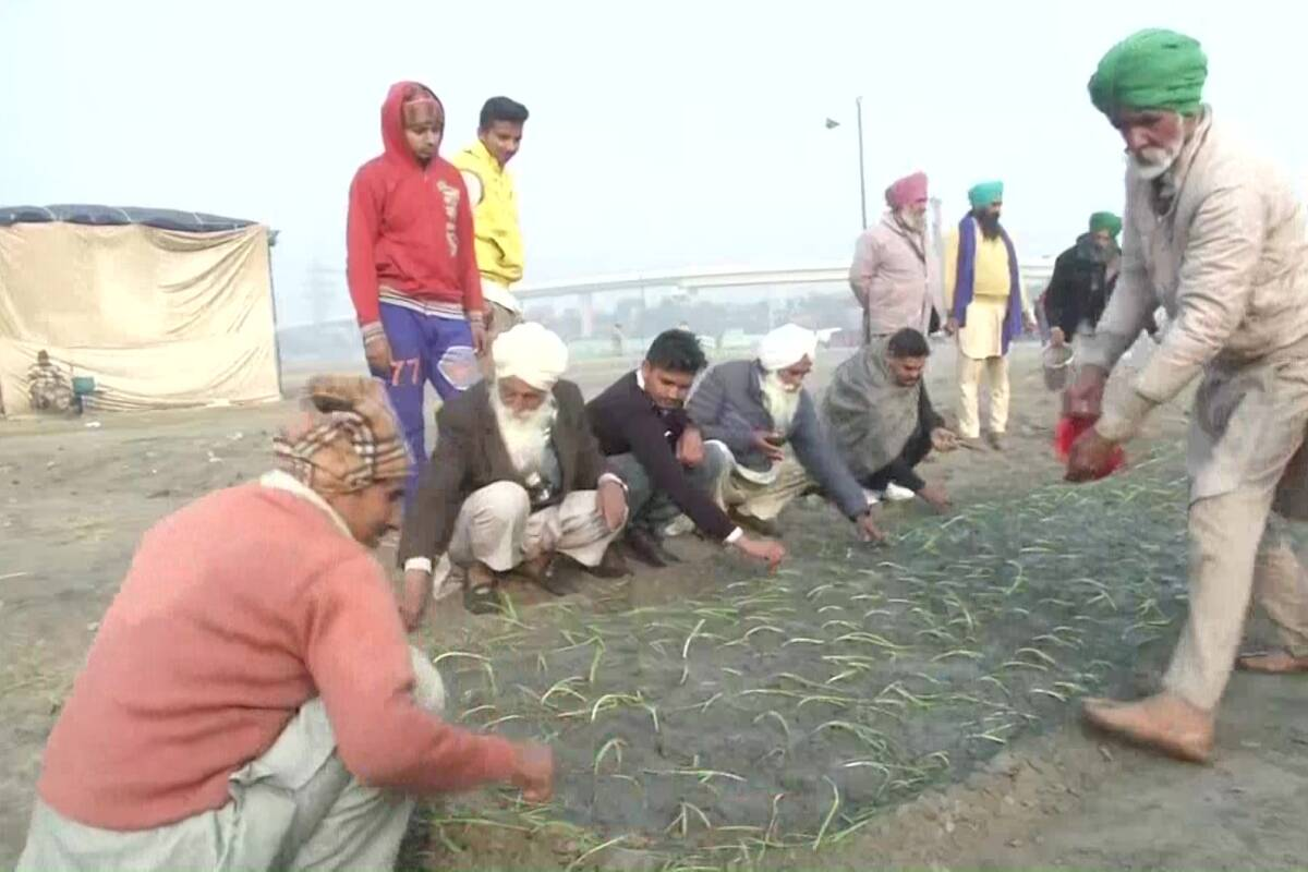 Protesting farmers utilize 'idle' time farming onion crops at Nirankari Samagam ground