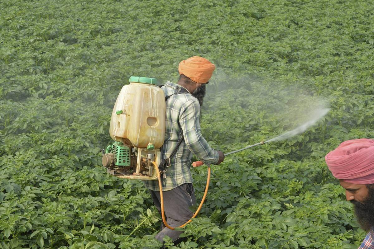 Punjab farm subsidy higher than annual income for farmers in rest of country!