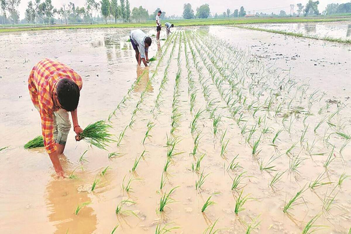 Kharif sowing picks up pace, even as rainfall gets delayed
